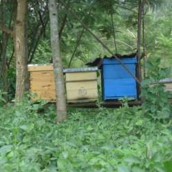 2. Modern hives 1 2015-06-25