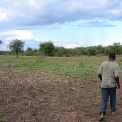 field regenerating