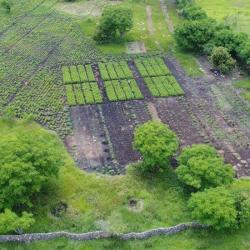 Indonesian Rural Economic Development